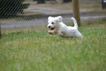 Banksia Park Puppies Schnoodles With Images Puppies Park Animals