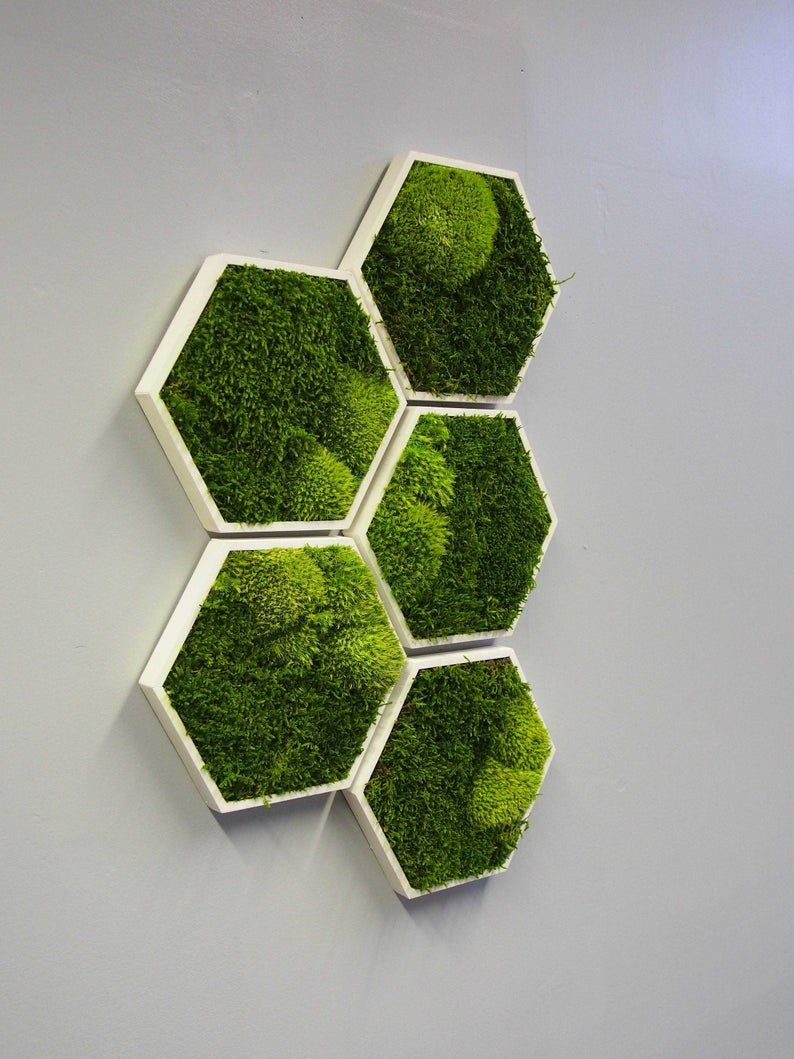 Moss Hexagon Wall Panels Made With Real Moss Mix And Match These Hexagons To Create Your Very Own Plant Wall No Maintenance Required Pflanzenwand Moos Dekor Mooswand