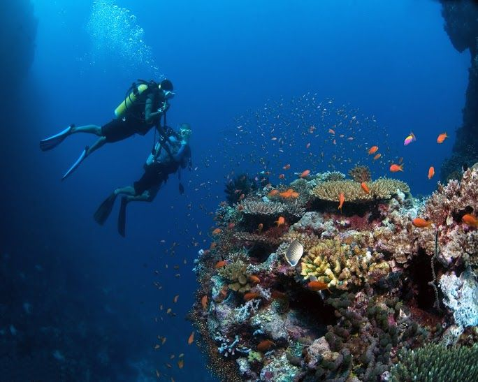 Viajar A Maldivas Es Disfrutar De Las Playas De La Belleza Natural Y Del Buceo Te Animas Hazlo Con Despegar V Tauchurlaub Tauchurlaub Agypten Agypten