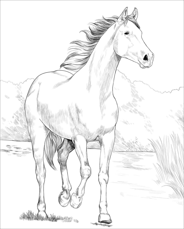 Shagya Arabian Horse coloring page Desenho de Árabe Shagya ...