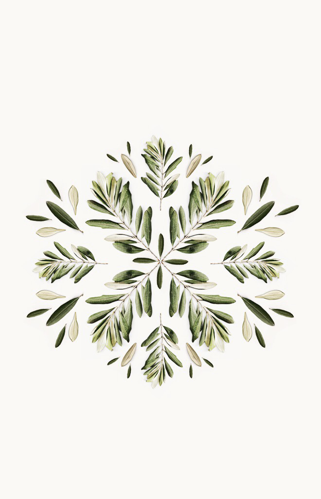 Delta Breezes Botanical Patterns In 2019 Olive Tree