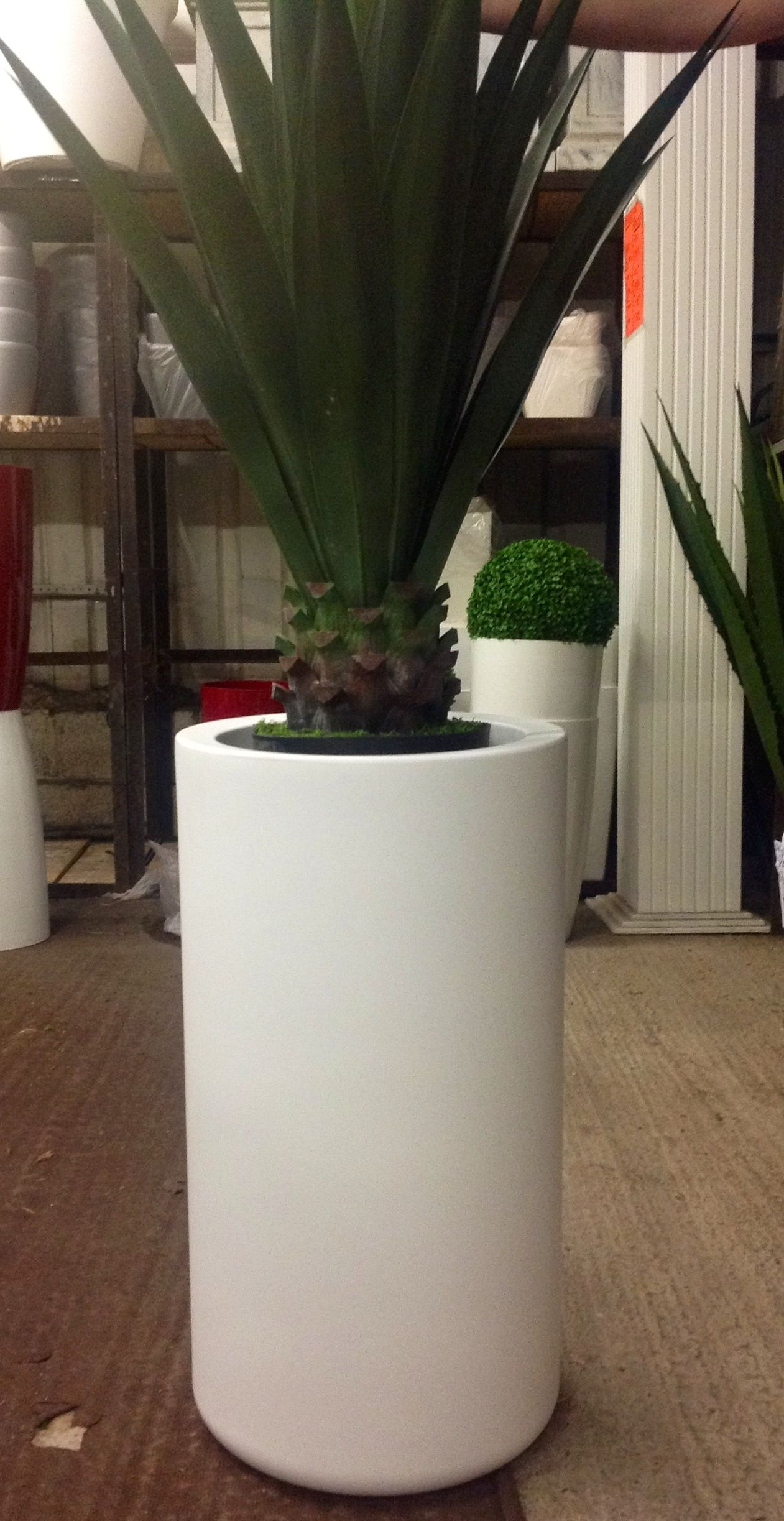 Large Planters and Palm add more visual appeal to any event! They can even be illuminated with LED lights!