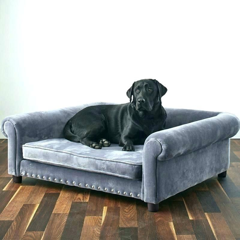 Best Extra Large Dog Beds For Large Dogs & Giant Breeds ...