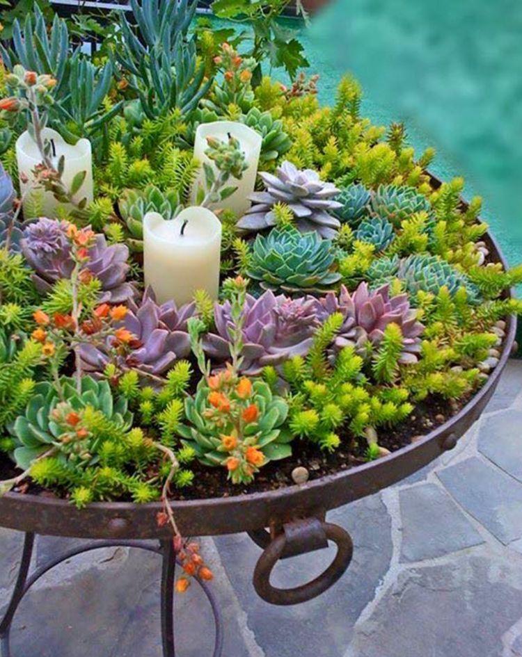 Déco jardin en plantes grasses – 40 idées pour pimper l\'extérieur