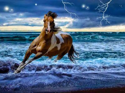 صور البحر 2020 خلفيات بحر وسفن للفوتوشوب Horses Horse Wallpaper Animals