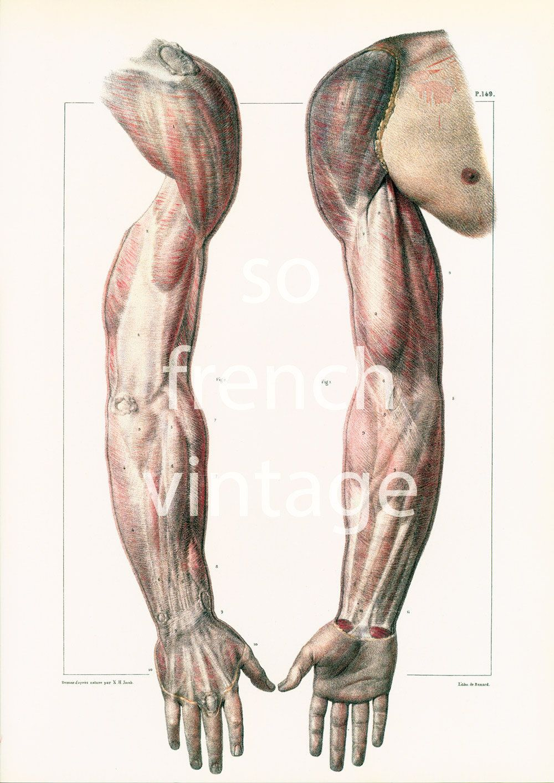 29x40cm muscles du bras et de la planche anatomique corps humain bourgery desenhos