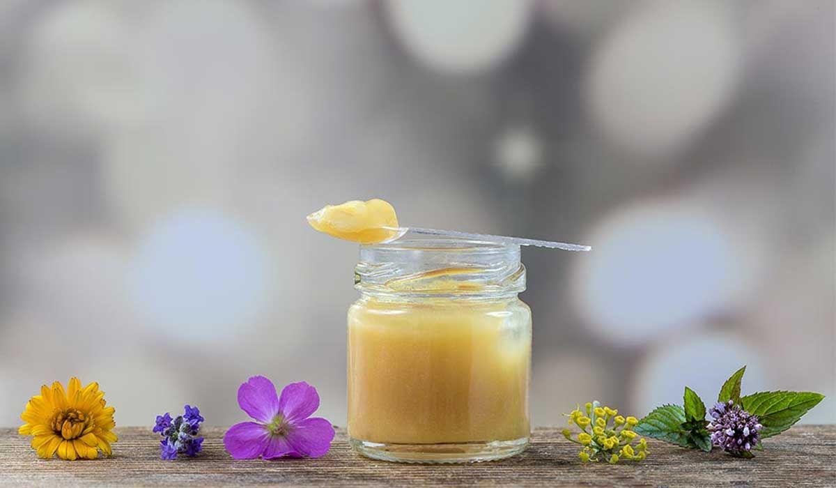فوائد عسل ملكات النحل للحمل Youtube 4