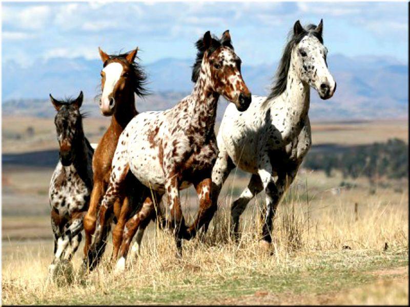 сорта картинки кони пестрые должна быть теплой