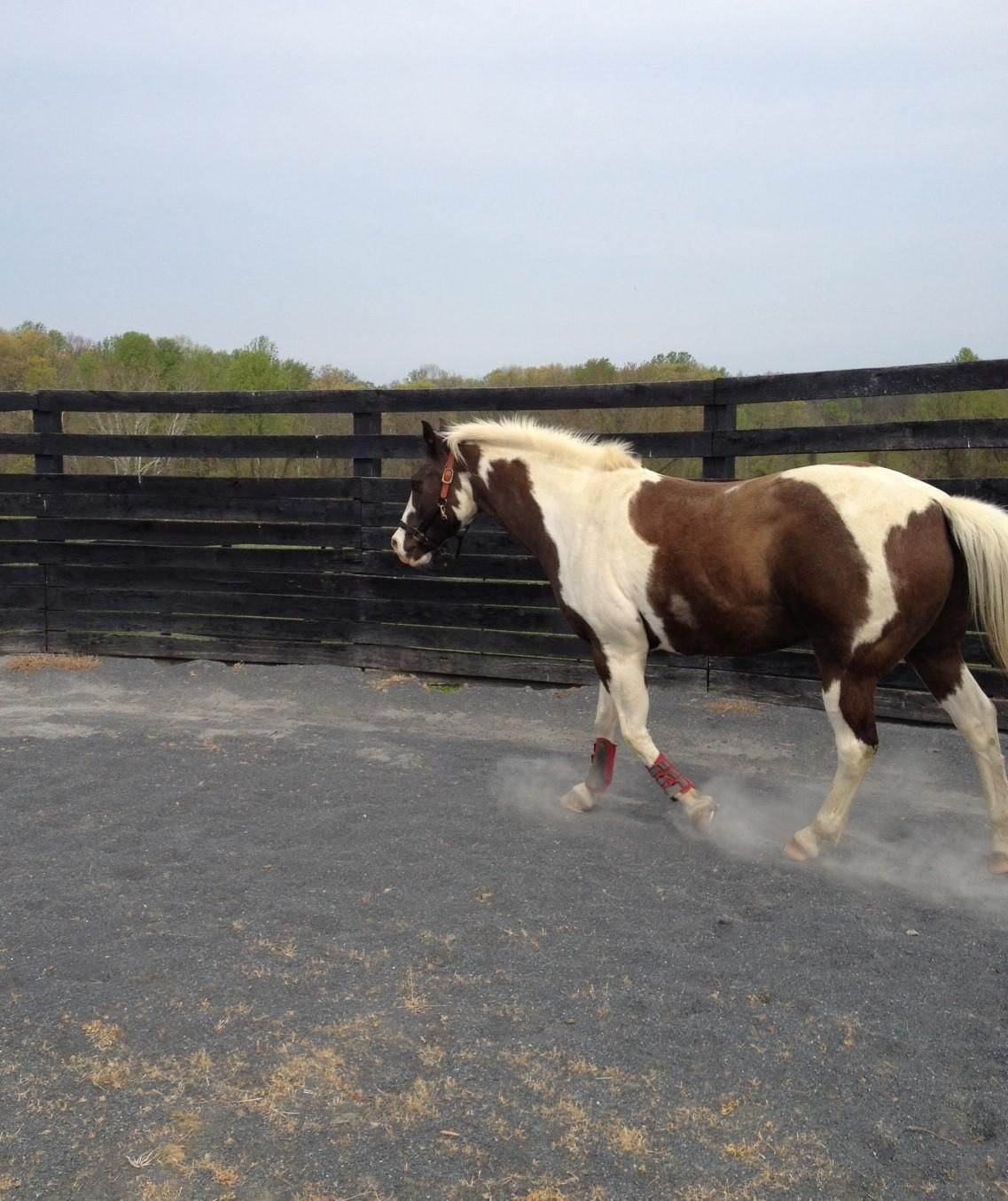 Adopt COURTESY LISTING- Kody on | Horses for adoption at MHF