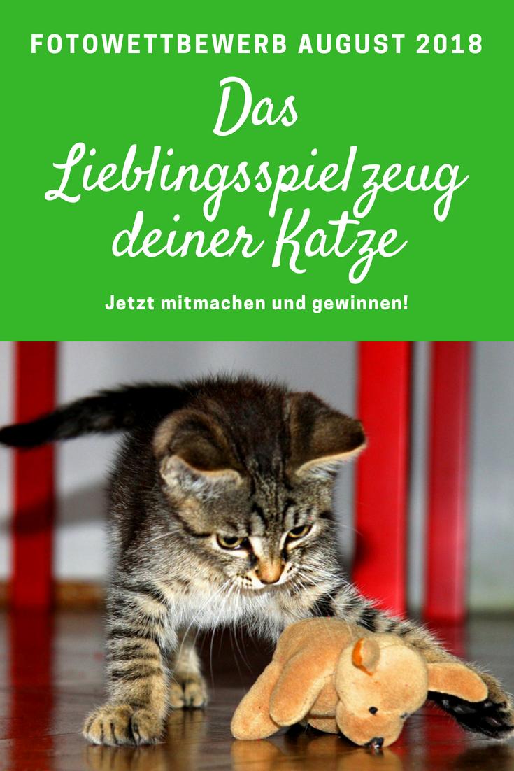 Fotowettbewerb Im August Welches Ist Das Lieblingsspielzeug Deiner Katze Katzen Katzchen Spielen Lustige Katzenbilder