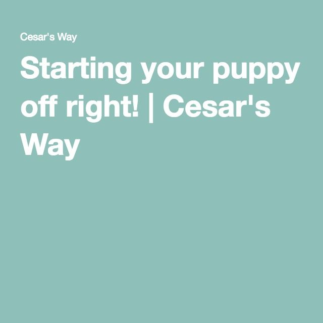 Starting your puppy off right! | Cesar's Way