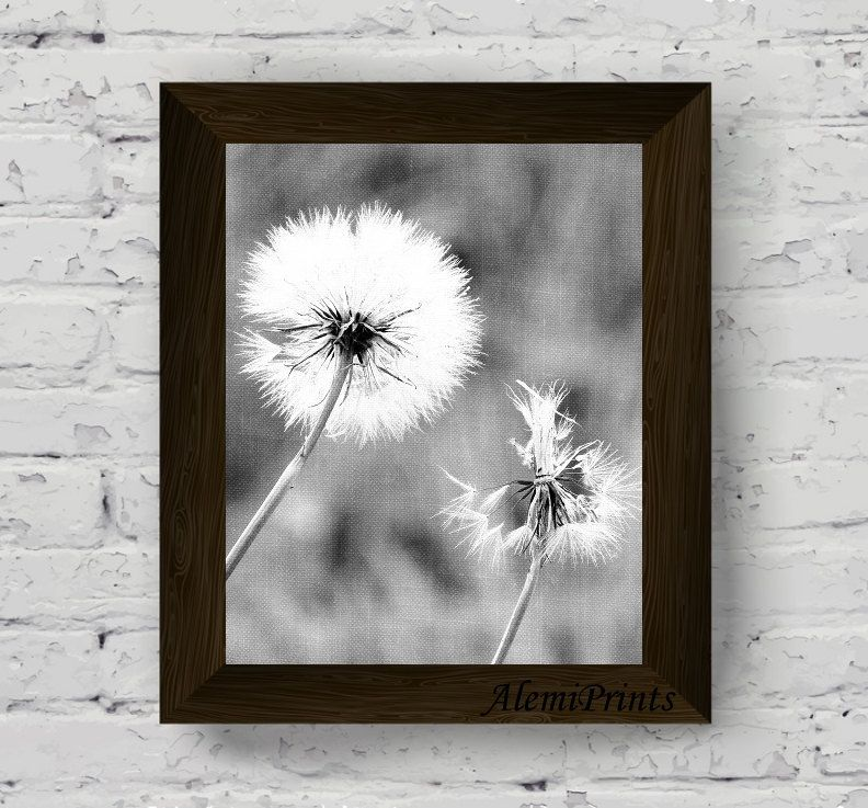 Dandelion wall art black and white flower print nature photography botanical poster floral printable artwork instant digital download