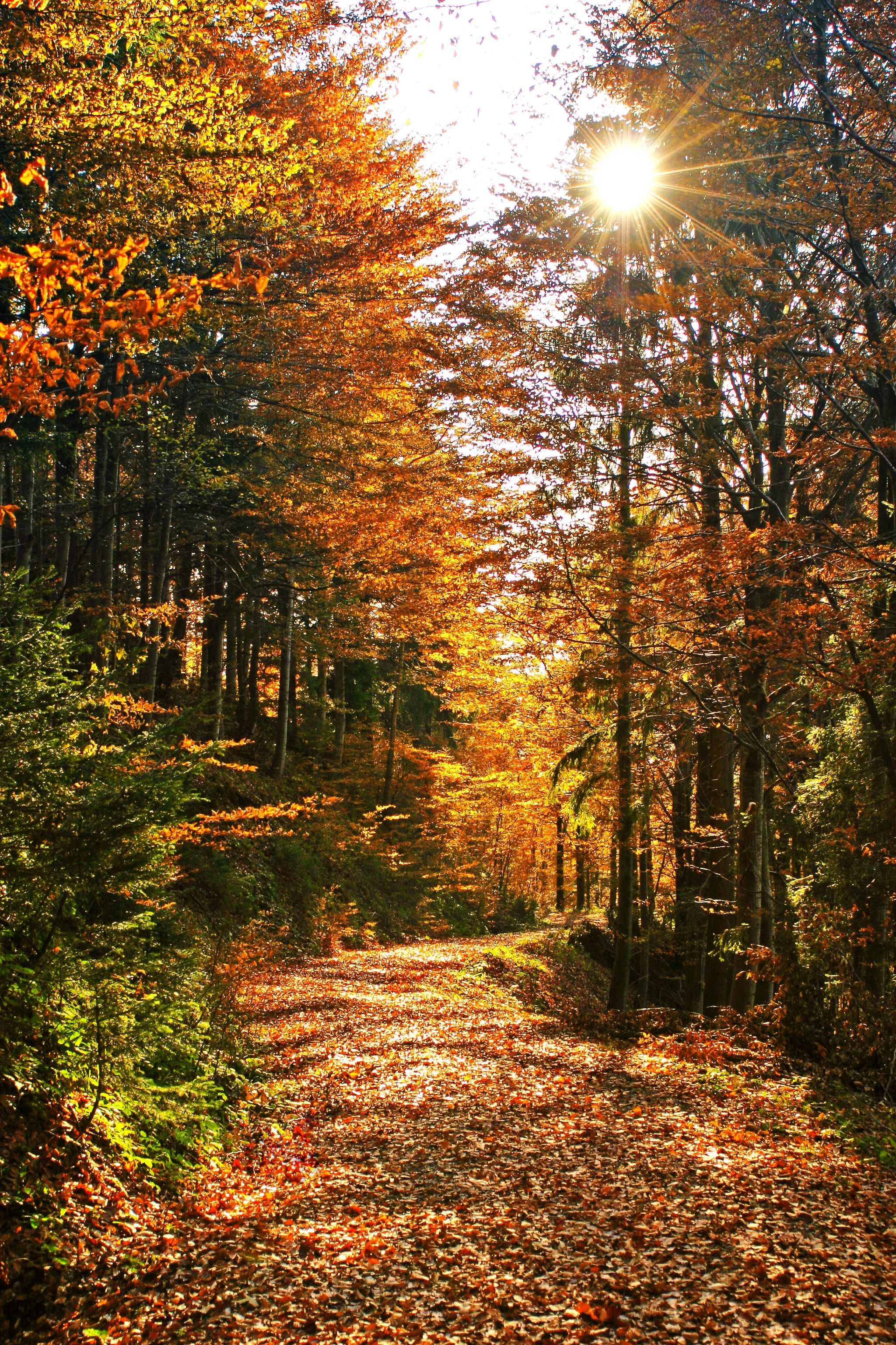 Thoughts about all those leaves we raked as kids only to turn around and jump in them, life was simple fun!