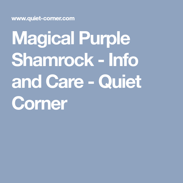 Quiet Corner Container Gardening Ideas: Magical Purple Shamrock - Info And Care