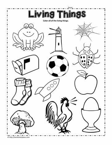 Circle The Living Things Worksheet Science Worksheets Kindergarten Science Kindergarten Worksheets