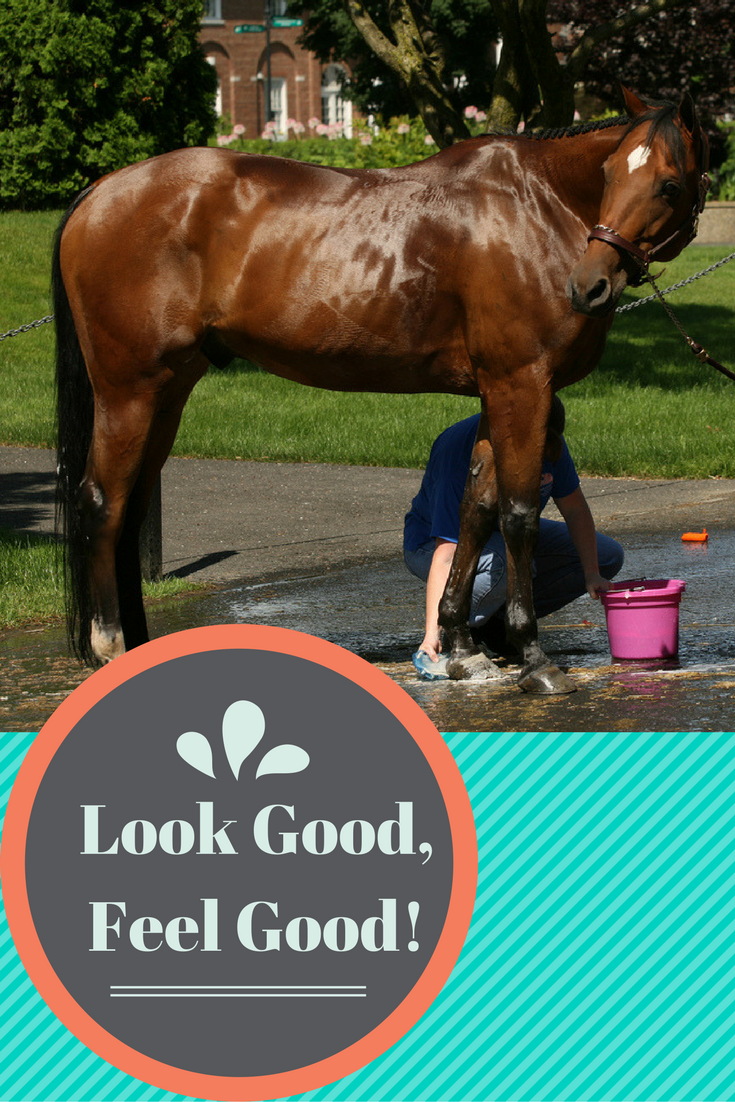 Follow these grooming tips to keep your horse happy and