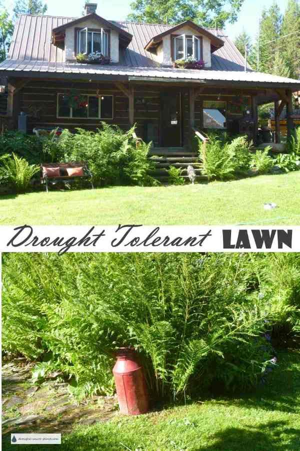 Drought Tolerant Lawn There S More To A Lawn Than Grass 400 x 300