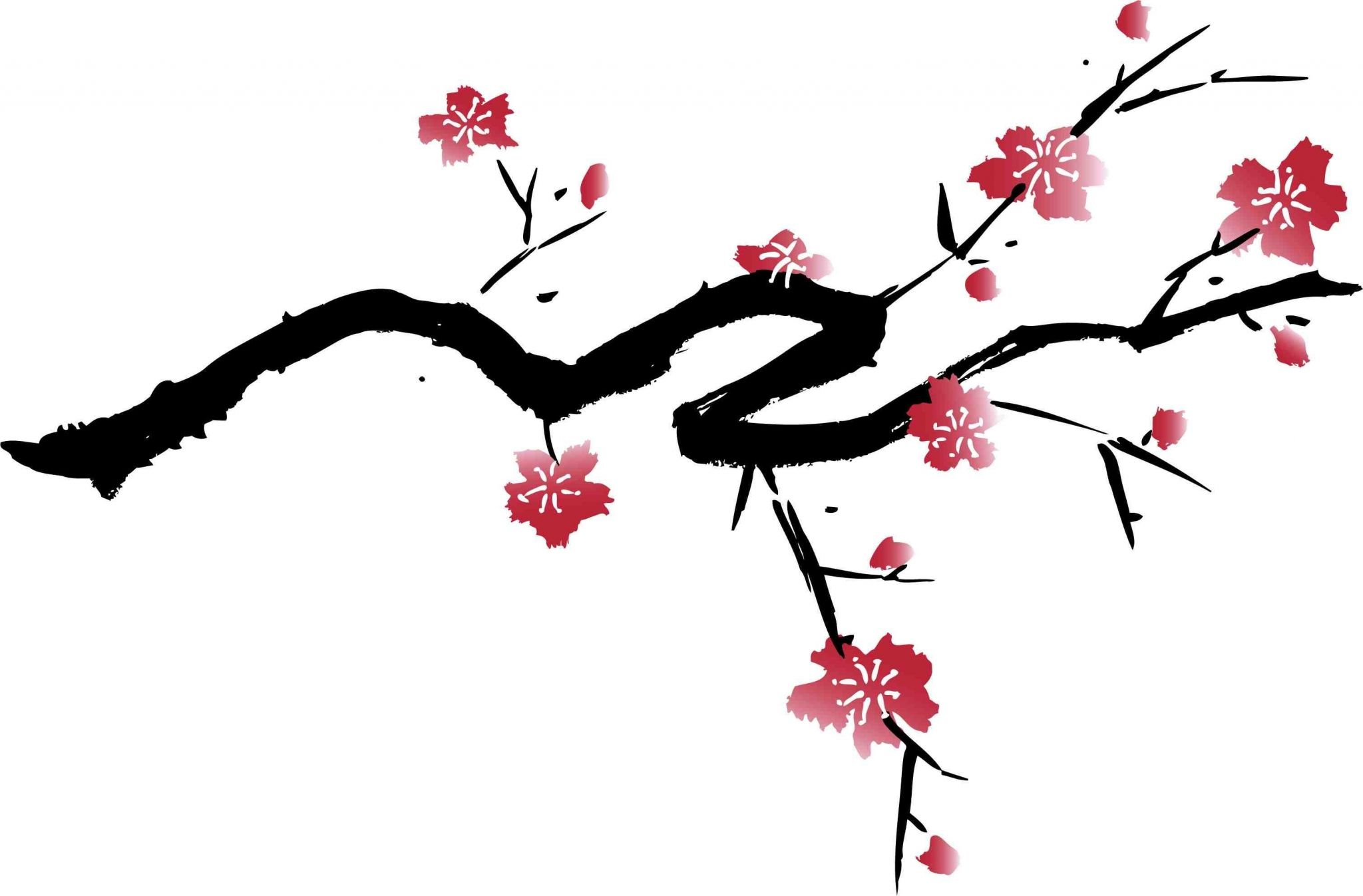 Cherry Blossom High Resolution Wallpapers Widescreen Japanese Cherry Tree Cherry Blossom Images Japanese Cherry Blossom