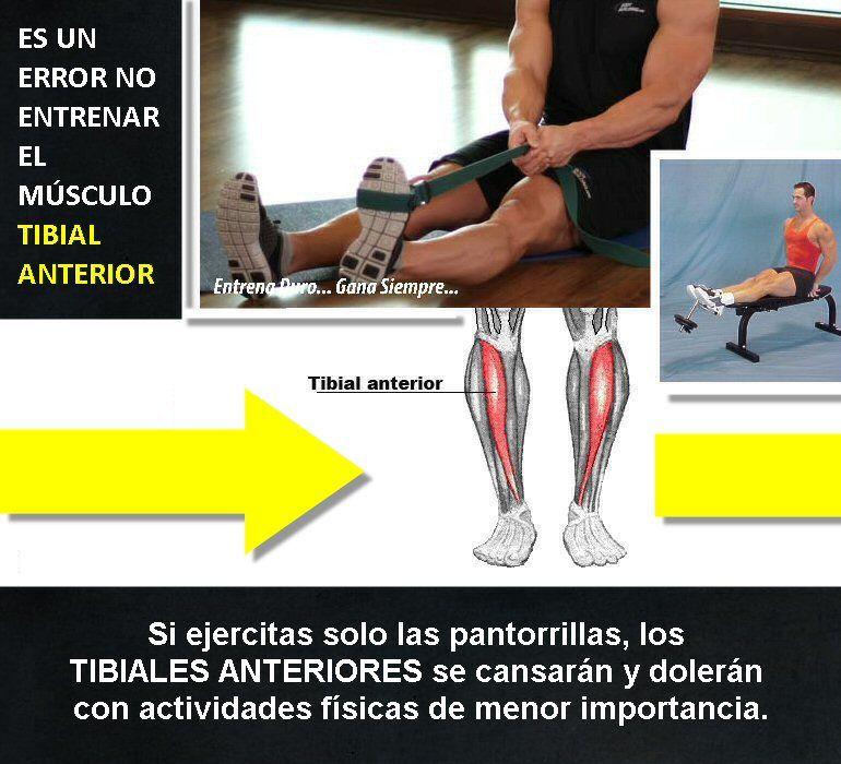 Asegúrate de entrenar el músculo tibial anterior. Muchos no lo hacen ...
