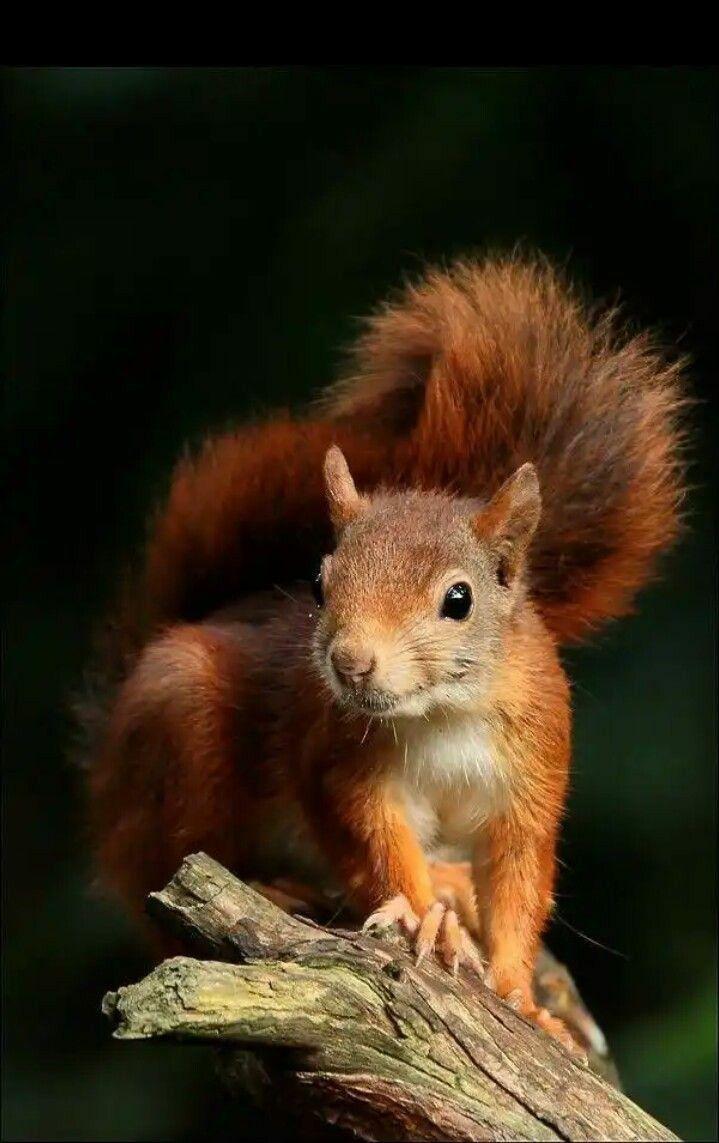 Pin by Pearl Aranda on Squirrels Cute animals, Cute