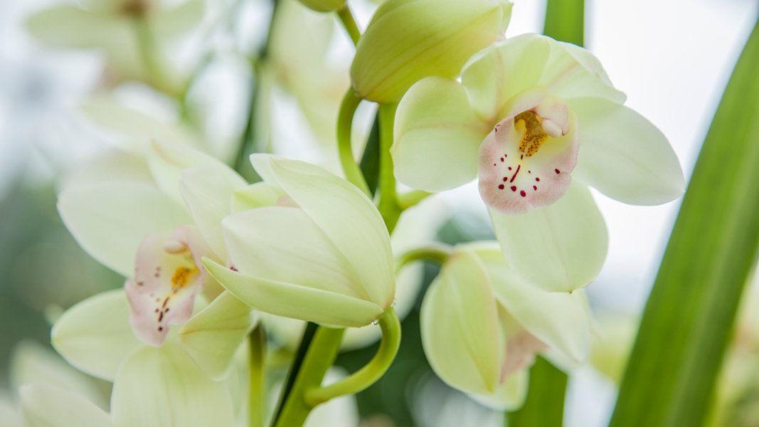 Orchideen Sind Beliebte Zimmerpflanzen Mit Wunderschönen Blüten ... Hortensien Pflege Lernen Sie Wie Sie Ihre Zimmerpflanzen Pfoegen
