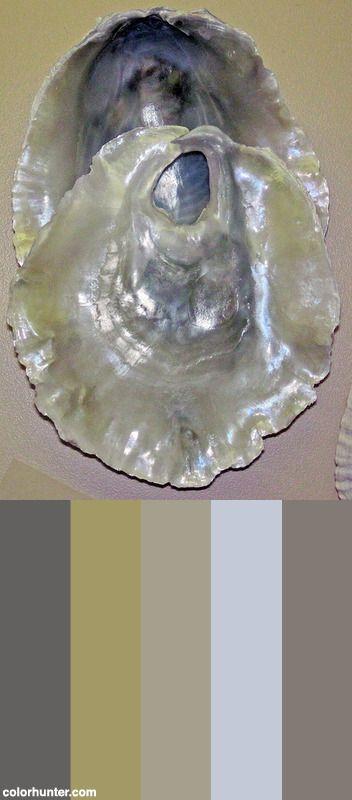 Monia+Macroschisma+(false+Pacific+Jingle+Shell)+2+Color+Scheme