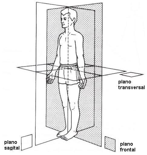plano frontal: plano transversal: plano sagital: | anatomia humana ...