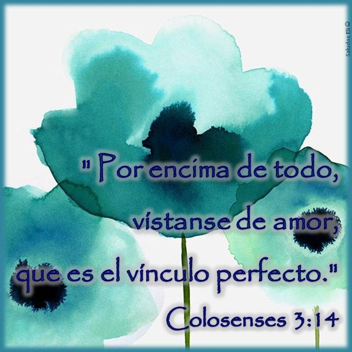 """"""" Por encima de todo, vístanse de amor,  que es el vínculo perfecto."""" Colosenses 3:14"""