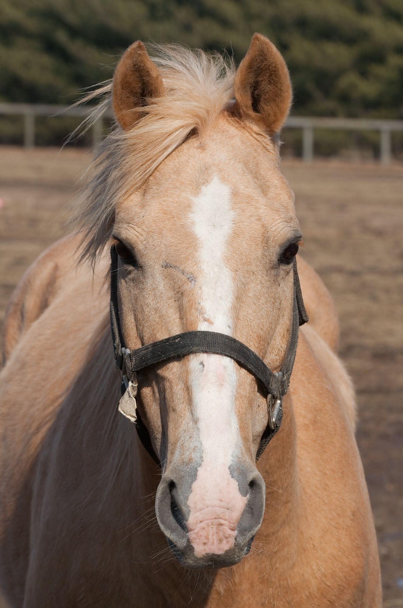horse face - Google Search | HORSES I'D LOVE ...