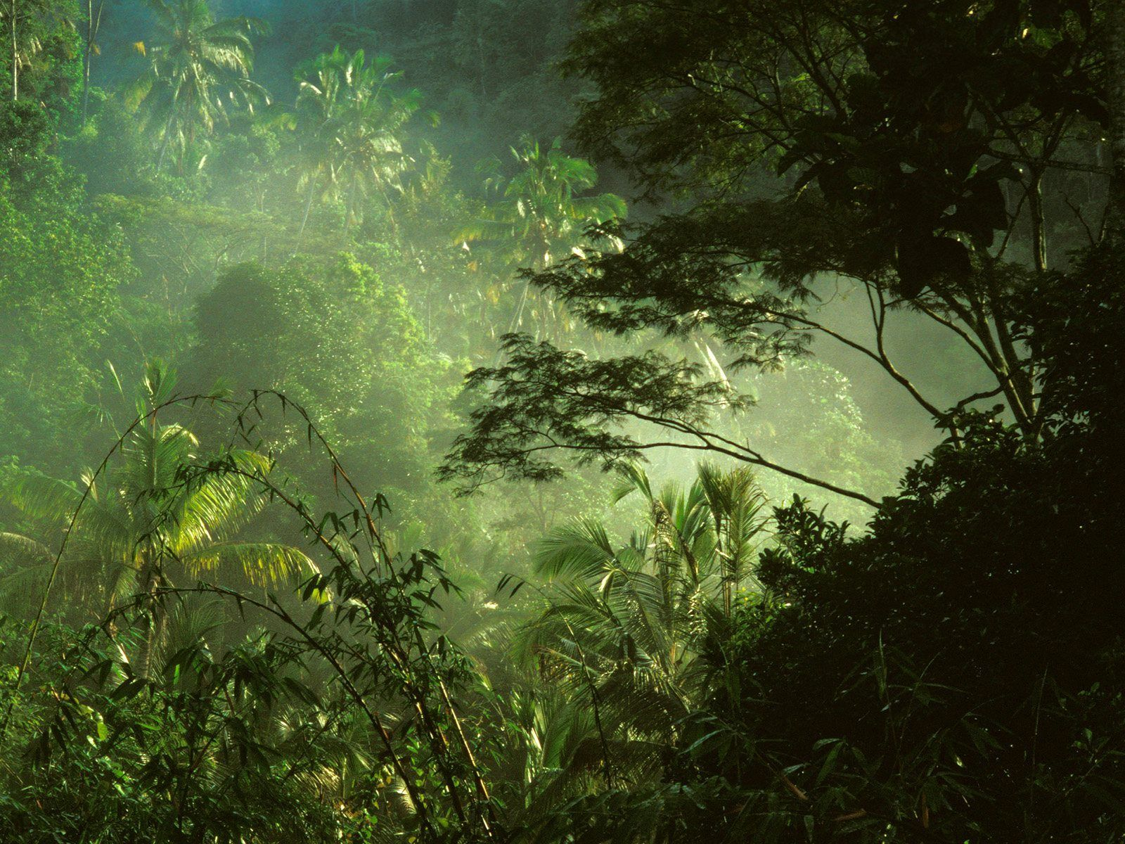 """near Ubud, Bali, Indonesia Tropical Rainforest on"