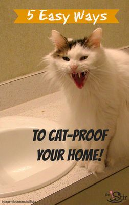 How To Cat Proof Your House Cat Stuff Cats Cat Hacks