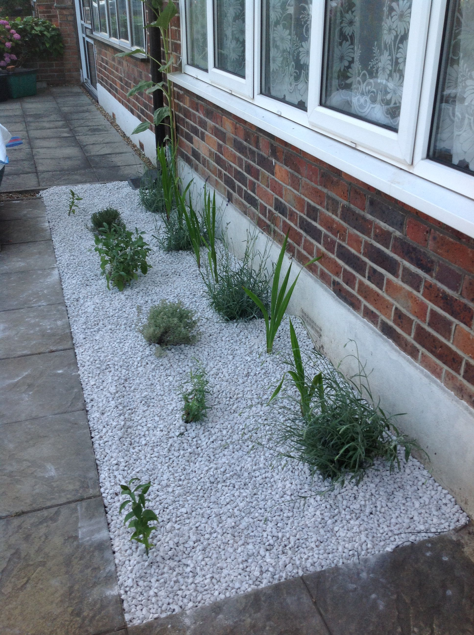 white gravel driveway herb and flower border  tarragon  thyme and lavender