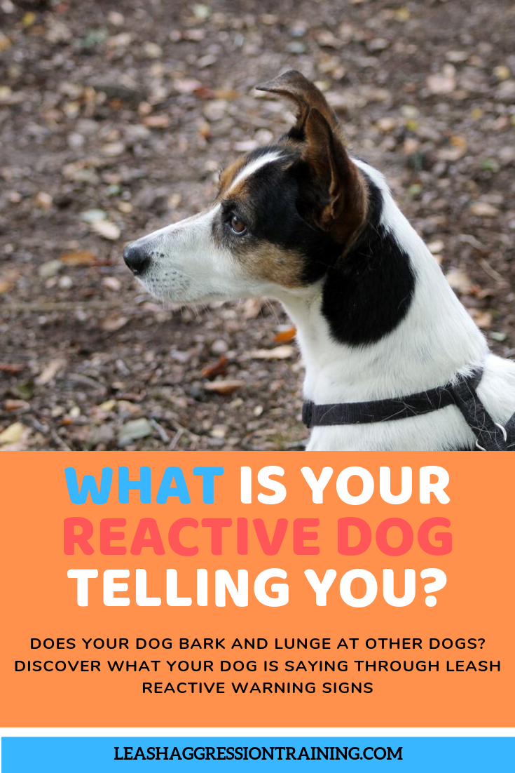 Understanding Your Dogs Leash Reactive Warning Signs And Triggers Your Dog Dogs Dog Training Obedience