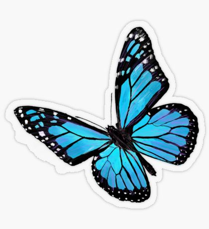 Pastel Blue Butterfly Aesthetic