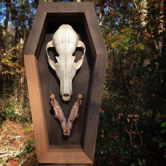 Vanitas Display Series Real Red Fox Skull Natural Stained Beaver