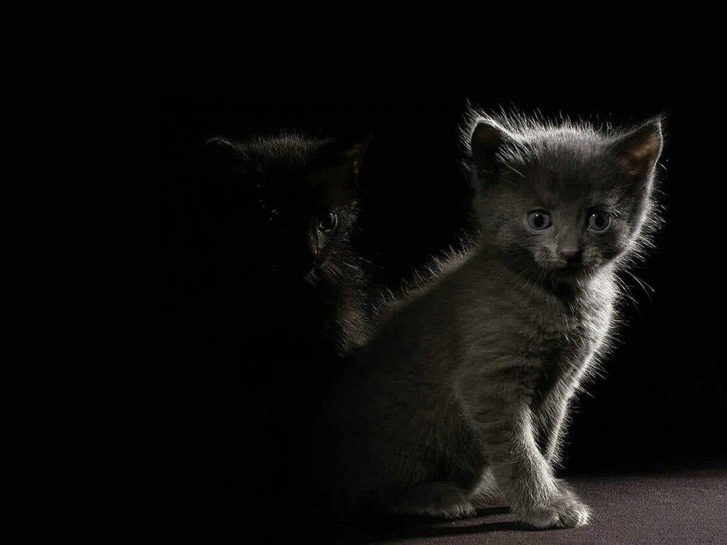 kittens-in-the-dark-hd-animals-free-amazing-wallpaper.jpg (1024×768)
