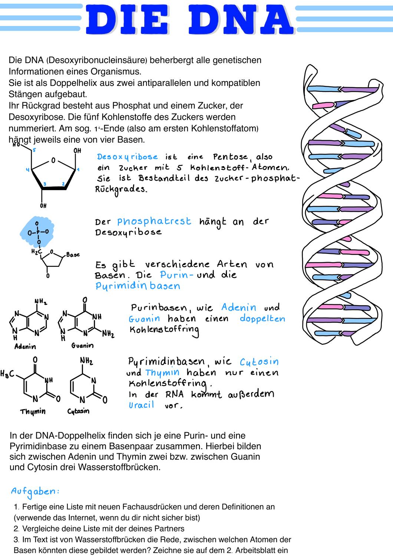 Studium Genetik