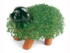 Next trendy health food: ch-ch-ch-chia? (Image credit: chiapet.com)