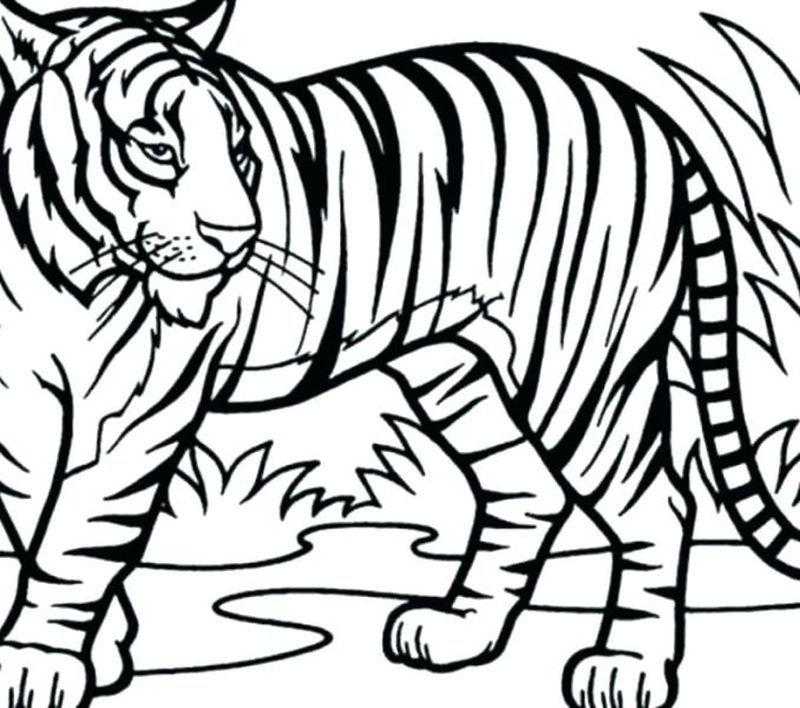 Daniel Tiger Coloring Pages Pdf Shark Coloring Pages Cat Coloring Page Football Coloring Pages