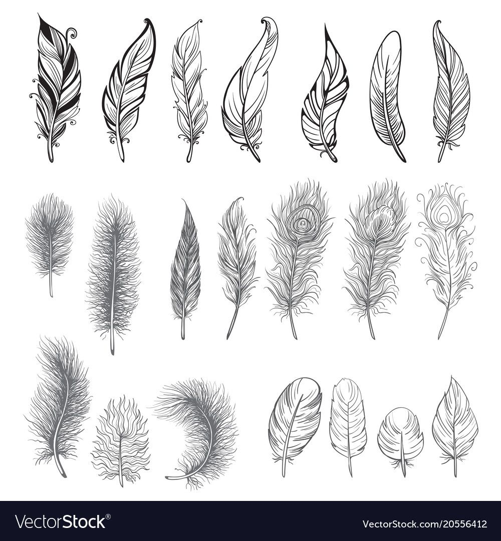 Collection of hand drawn feather vector image on VectorStock