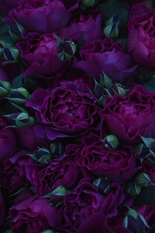 Пин от пользователя Валерия на доске Flowers | Фиолетовые ...