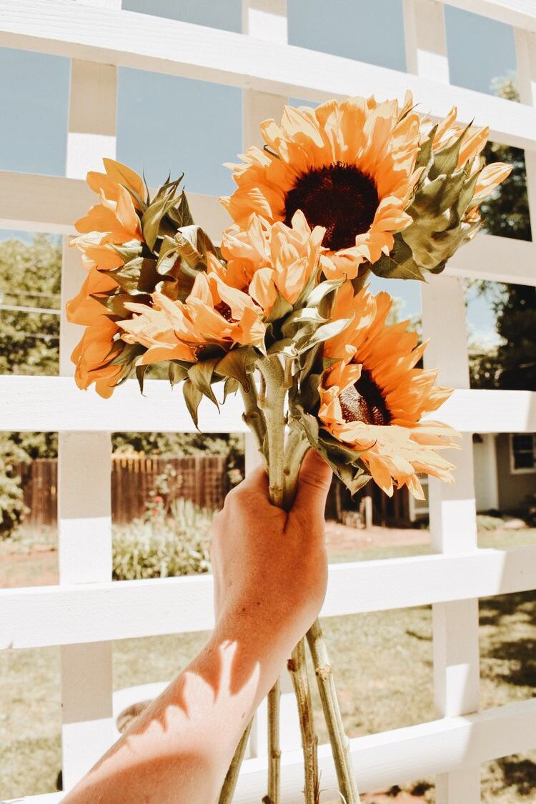 j u l e s with images sunflower wallpaper