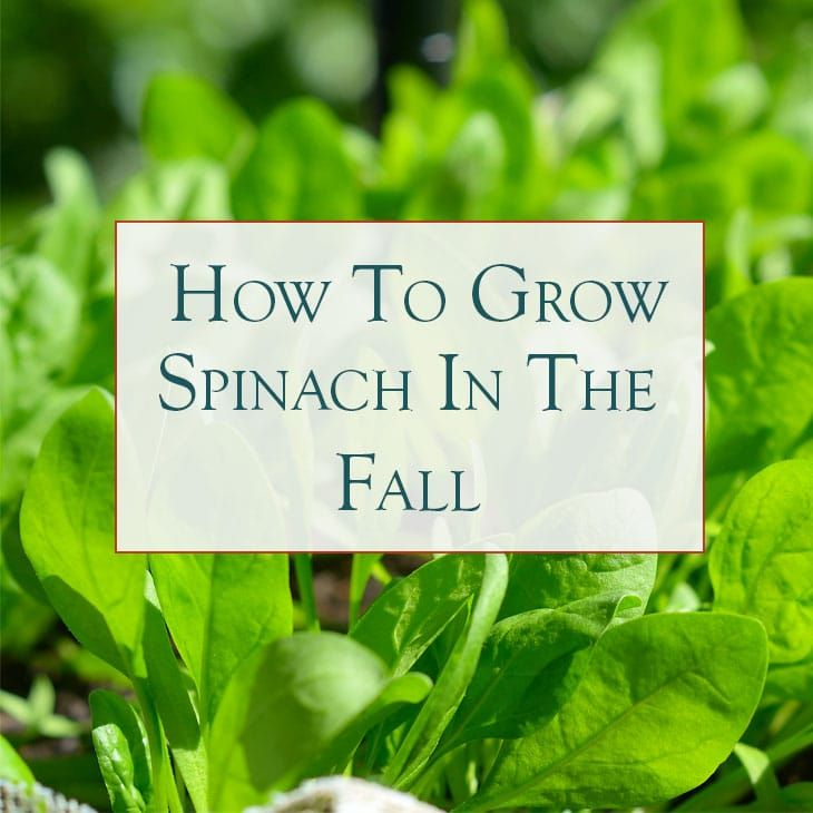 How To Start A Fall Vegetable Garden & Why You Should