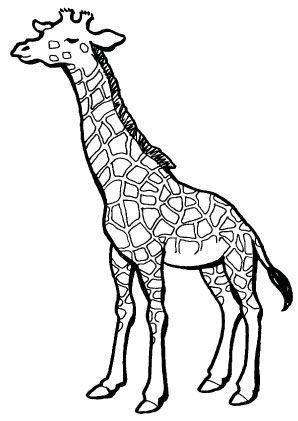 8 beste ausmalbilder giraffe tiere malvorlagen kinderzimmer | giraffenzeichnung, tiere zeichnen