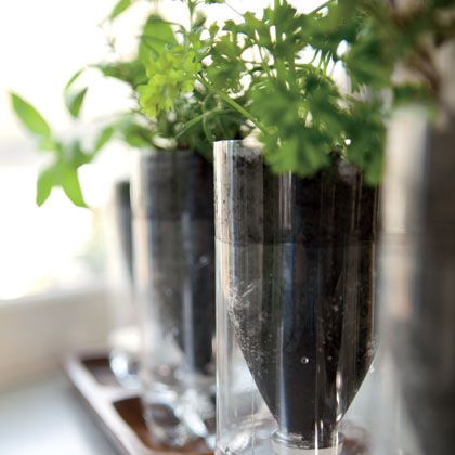 Self Watering Plastic Bottle Herb Gardens by Naomi Shulman, familyfun: Upcycle plasstic bottles and grow your own herbs as well.