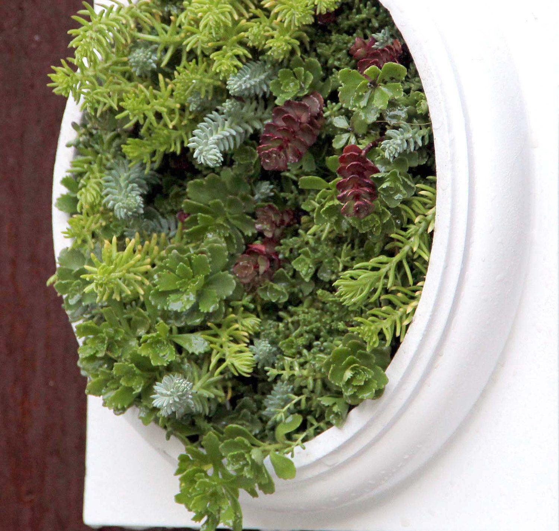 Living Wall Planter living wall planter. framed grovert living wall planters framed