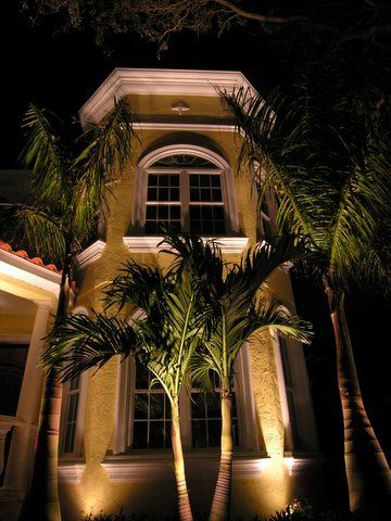 Night Lighting On Adonidia Christmas Palm Trees Landscape Services Outdoor Lighting Landscape Lighting