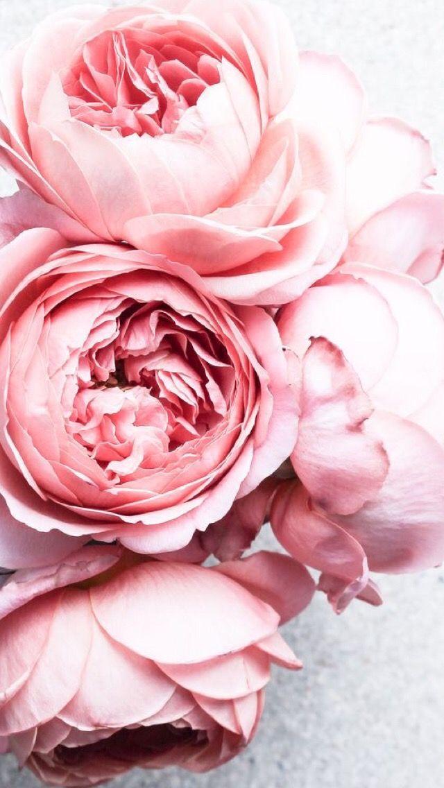Обои iPhone wallpapers Розовые пионы, Блум, Пионы