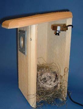 Hawk Eye Hd Bird Cam Bird Houses Bird House Backyard Birds