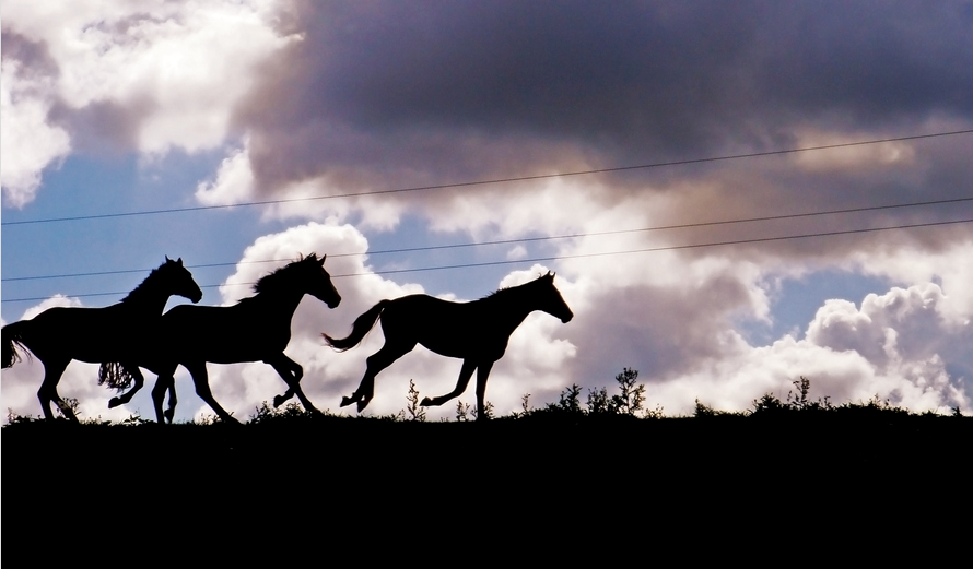 انطلاق ندوة تشخيص وعلاج عرج الخيل بعمان Horse Wallpaper Beautiful Horses Horses